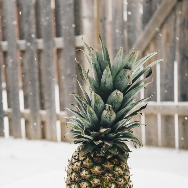Pineapples.jpg